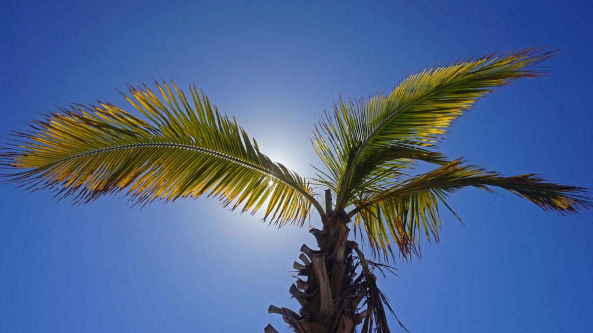 Sonne und Palmen auf den Kanaren